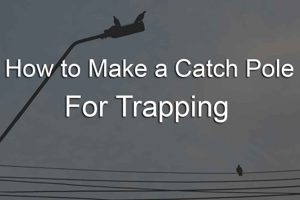 how to make a catch pole for trapping