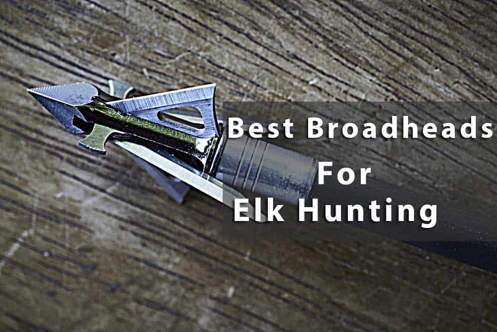 Top 5 Best Broadheads for Elk Hunting with Comprehensive Buying Guide