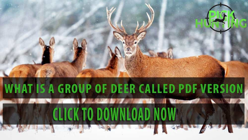 What is a Group of Deer Called? [Secret Infos Revealed]