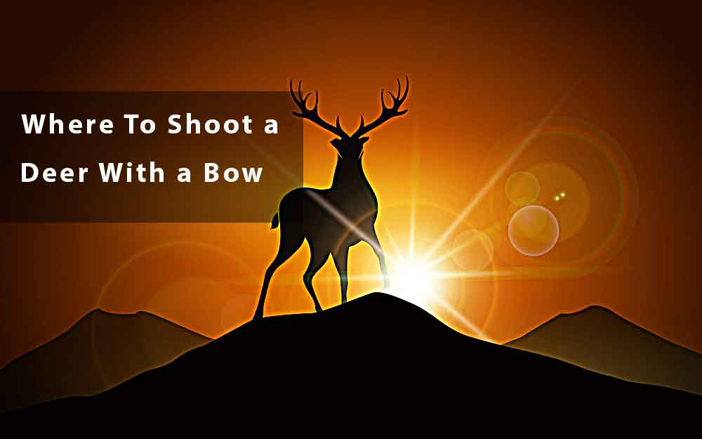 where-to-shoot-a-deer-with-a-bow