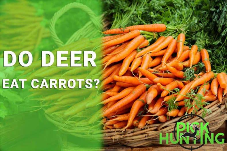 do deer eat carrots