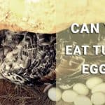 can you eat turkey eggs
