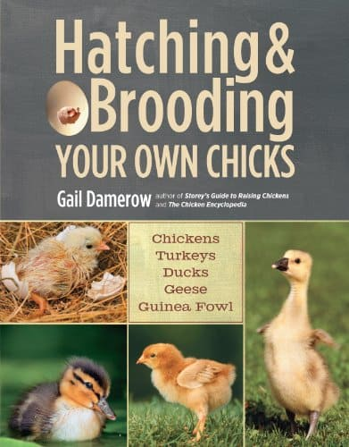 suggested books for turkey eggs