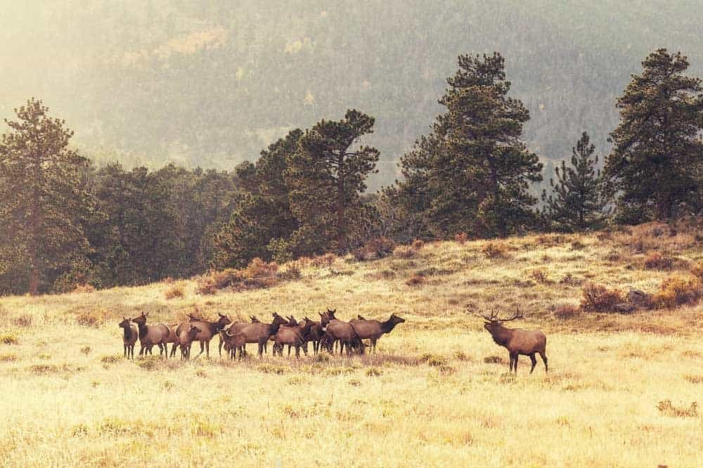 how many deer in a herd