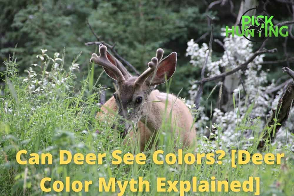 can deer see color