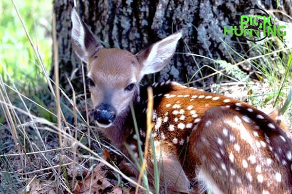 How To Care For A Newborn Fawn? [Complete Care Guide]