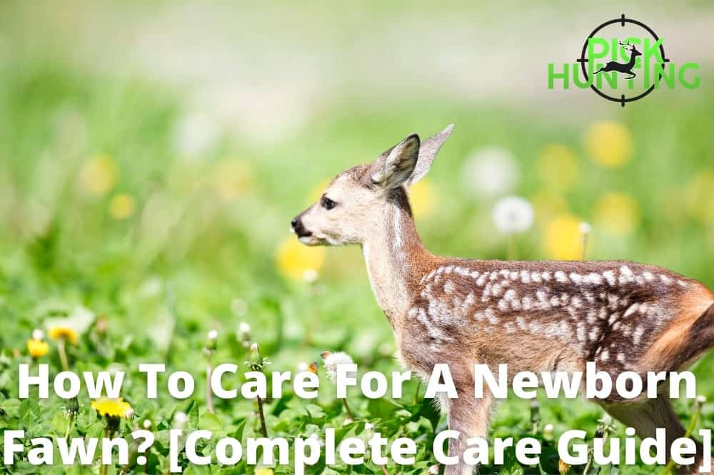 how to care for a newborn fawn