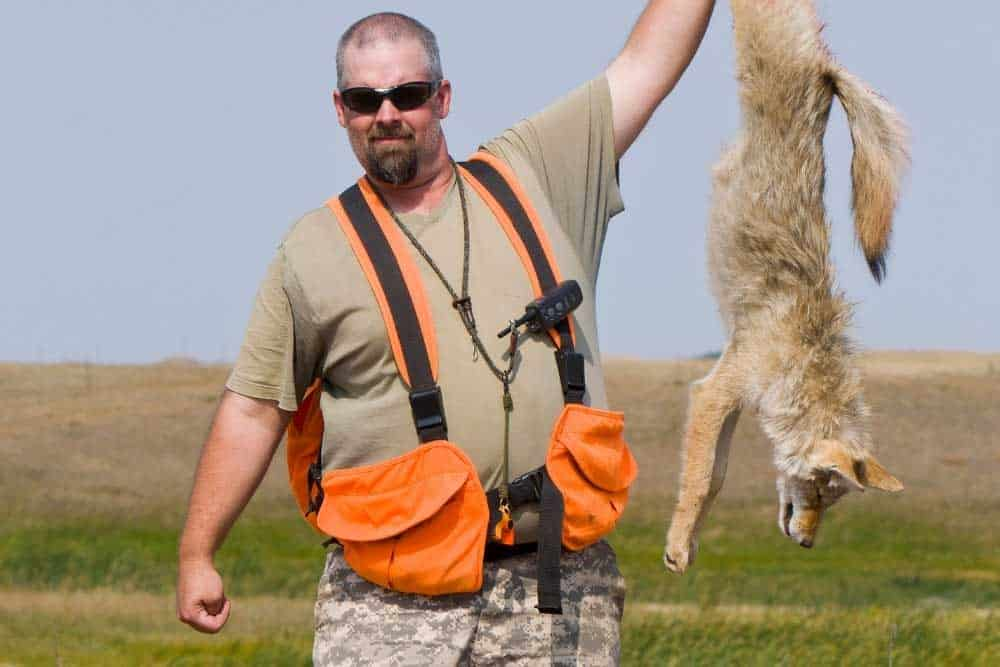 coyote hunting 101